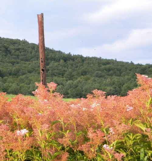Memory tree and pinks2